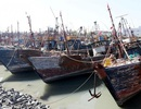 Tàu cá Trung Quốc lộng hành: Chạm trán chết người