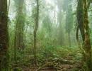 Rừng Amazon có lẽ không thể cứu vãn được nữa