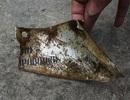 Cận cảnh hiện vật nghi của máy bay MIG-21U mất tích năm 1971 ở Tam Đảo