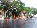 Đà Nẵng lấy ý kiến người dân thu phí một phần lòng đường đỗ ô tô