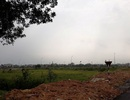 """Hàng trăm lô """"đất vàng"""" được đấu giá bèo tại Thanh Hóa: Định """"vải thưa che mắt thánh""""?"""