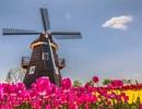 Hội thảo Hà Lan: Cơ hội dành học bổng lên tới 100% học phí