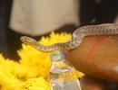 """""""Rắn thần"""" trên mộ người ăn xin chỉ là... rắn nước"""
