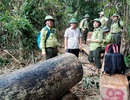 Vụ tàn phá rừng phòng hộ: Nhiều lực lượng mà không giữ được rừng!