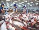 Nguy cơ cá tra mất thương hiệu vì xuất tiểu ngạch sang Trung Quốc