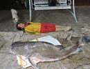"""Bắt được cá lăng """"khủng"""" 85kg trên sông Sêrêpốk"""