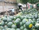 Hoa quả ùn ùn sang Trung Quốc, Lạng Sơn khuyên các tỉnh điều tiết, tránh bị ép giá