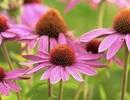 7 kháng sinh hiệu quả trong tự nhiên