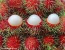 New Zealand chính thức chấp thuận nhập khẩu chôm chôm từ Việt Nam