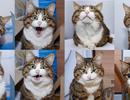 """Chú mèo tật nguyền đốn tim cư dân mạng bằng """"50 sắc thái"""" cực kỳ đáng yêu"""