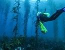 Sóng nhiệt đại dương đang trở nên phổ biến và kéo dài lâu hơn