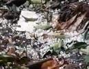 Xuất hiện mưa đá ở huyện miền núi