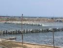 Thu hồi 50 ha của dự án nuôi tôm công nghiệp vì không hiệu quả