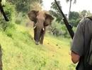 Kinh ngạc người dùng tay không chặn voi hung dữ