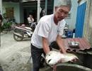 Ngư dân bắt được cá 4kg nghi là cá sủ vàng