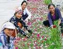 Trích kinh phí, phát động trồng 150.000 m2 cây hoa hai bên đường