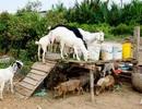 """Bí thư Nguyễn Thiện Nhân chỉ đạo kiểm tra vụ bán 32ha đất công giá """"bèo"""""""