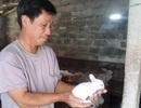 """Lão nông kiếm chục triệu đồng/tháng dễ như """"trở bàn tay"""" nhờ nuôi thỏ ngoại"""