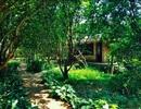 Hue Ecolodge - nơi nghỉ dưỡng tại Huế mà bạn nên trải nghiệm ngay