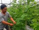 """Bỏ lương tháng chục triệu, Dũng """"khùng"""" kiếm tiền tỷ từ trồng rau"""