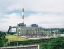 Tổng giám đốc Công ty CP Nhiệt điện Phả Lại được kết luận: Không có vấn đề gì về bằng cấp, năm sinh