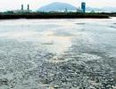 Hàng trăm doanh nghiệp bị thanh tra môi trường, Formosa nằm ngoài danh sách