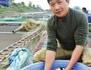 """Nuôi đàn """"quốc ngư"""" của Nhật Bản trên sông Hồng, lãi 2 tỷ/năm"""