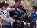 Du khách Trung Quốc ngang nhiên nhổ hết lông đuôi chim công trong sở thú