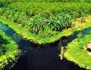 Rừng U Minh Hạ: Nơi con lươn cũng thành tinh