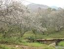 Lạc vào thiên đường mùa mơ trắng ở Mộc Châu