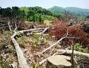 Để mất rừng, nhiều cán bộ bị kiểm điểm