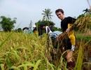 """""""Phát triển du lịch sinh thái bền vững gắn với nông nghiệp, nông thôn"""""""