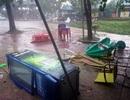 Lốc xoáy kinh hoàng trên đường vào động Phong Nha, một du khách tử nạn