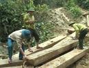 Khiển trách Phó Chủ tịch huyện vì để xảy ra vụ phá rừng nghiêm trọng