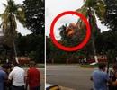 Khoảnh khắc máy bay chở khách Cuba lao xuống và phát nổ