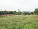 Bỏ 1 tỷ đồng mua đất Hà Nội: Sau 10 năm mất hết vốn lại còn mang nợ