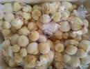 Mộng dừa trắng muốt, hàng lạ miền Tây hút khách Hà thành