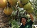 """Trên bờ trồng dừa, dưới vuông nuôi cua kềnh, mà xây được """"biệt phủ"""""""