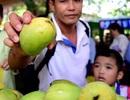 Lễ hội trái cây Nam Bộ 2018: Không thu phí trẻ em ngày 1/6
