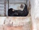 Đà Lạt: Khu du lịch thác Prenn Đà Lạt bị tố ngược đãi động vật