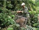 Thêm 5 cá thể động vật hoang dã được thả về tự nhiên