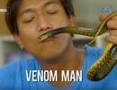 Cho rắn độc cắn hàng tuần để tăng cường miễn dịch
