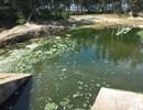 Vụ hồ tôm xả thải ra biển: Hơn 1.000m3 nước thải tràn ra ngoài
