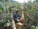 19 tập thể, 57 cá nhân bị kỷ luật vì liên quan đến hàng loạt vụ phá rừng