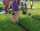 Cụ bà 71 tuổi tổ chức tour du lịch nông nghiệp làm du khách thích mê