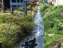 Xả thải vượt chuẩn, nhà máy đường Bình Định bị phạt gần 2 tỷ đồng