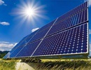 Đại gia cá tầm đầu tư điện mặt trời