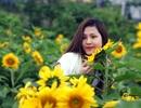 Đồi hoa hướng dương khổng lồ hút du khách về chân núi Fansipan