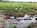 Phát hiện thi thể người phụ nữ giữa cánh đồng
