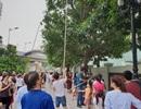 Cư dân Royal City và Times City phấn khích khi thu hoạch xoài